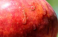 쇼핑몰디자인TIP - 사진에 물방울 효과주기